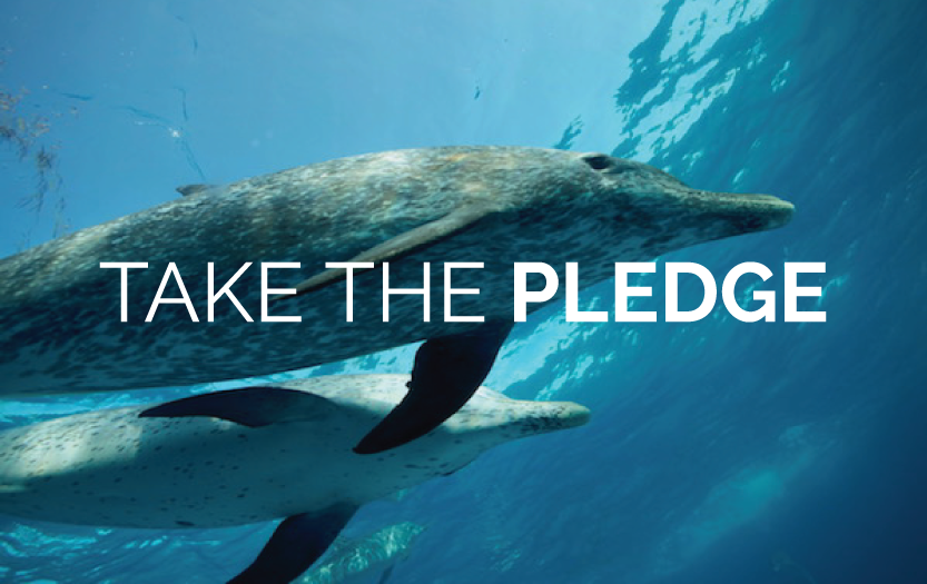 Take the Pledge to NOT Visit a Dolphin Show