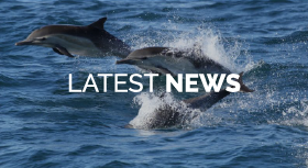 Dolphin Project Latest News