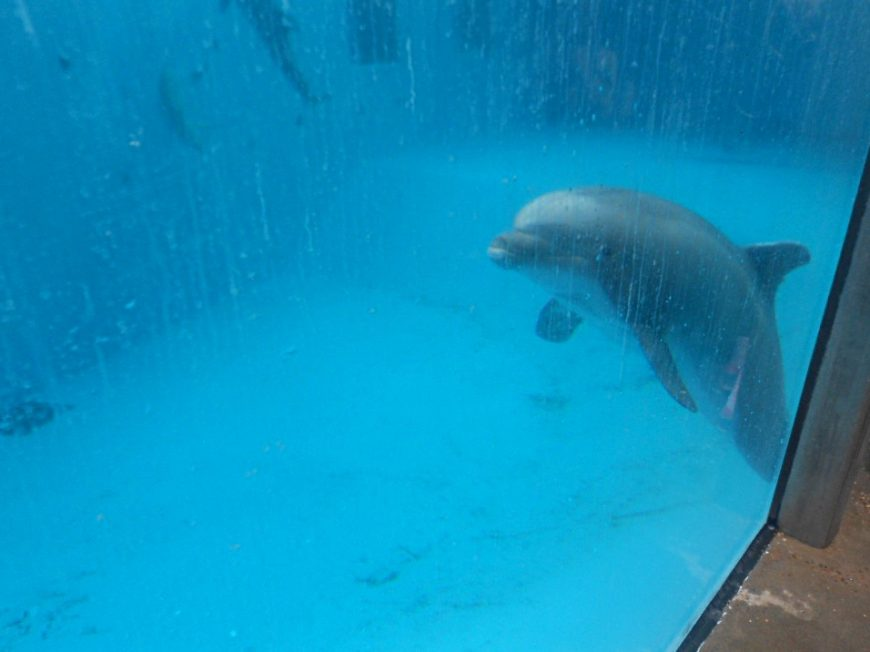 Beachie hovering near the bottom of his tank, Dolfinarium Harderwijk