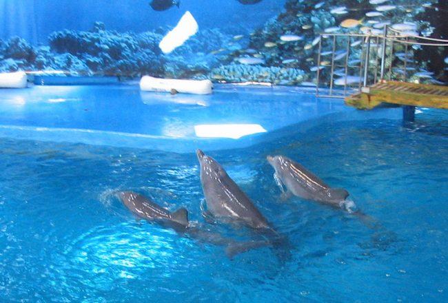 Barcelona Zoo Dolphinarium