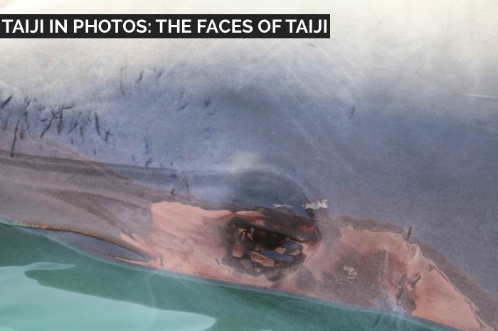 Taiji Dolphin Hunting and Capture Photos
