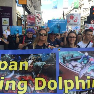 Japan Dolphins Day 2017, London.