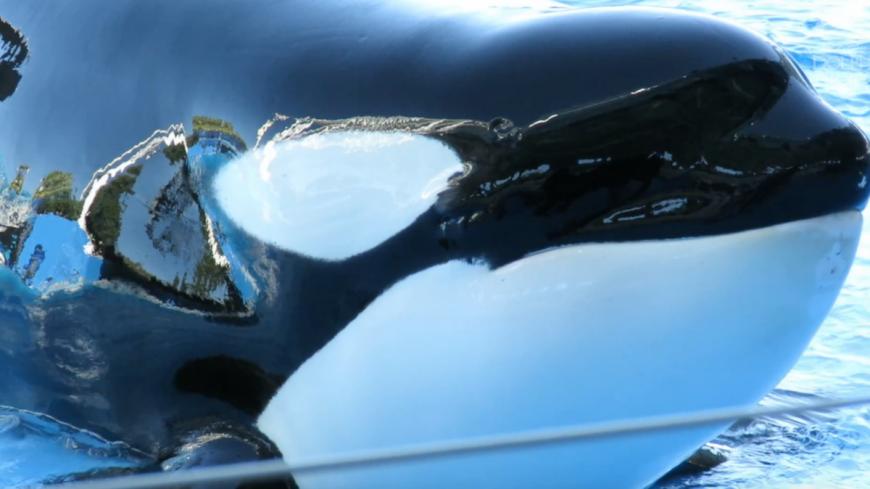 Katina, SeaWorld, credit: DolphinProject.com