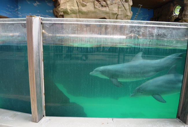 In between theatrical shows, the dolphins spend their time swimming in endless circles