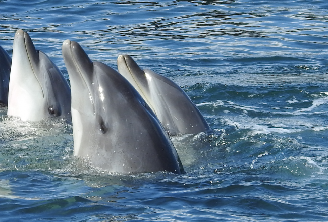Dolphin Prostitution in the Name of Holiday Fun