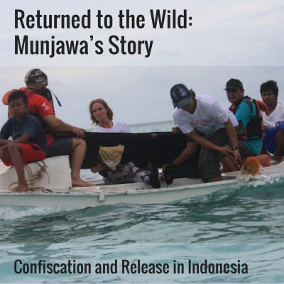 Indonesia Rescue Release Circus Dolphin Project