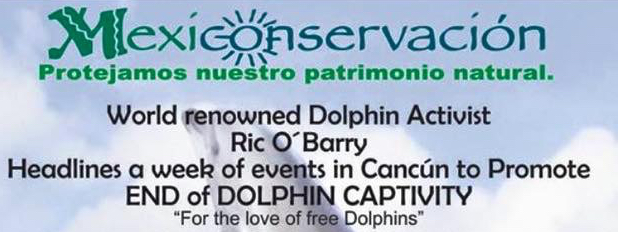 Cancun Opposes Captive Dolphin Shows