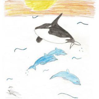 Wild dolphins - Chiara