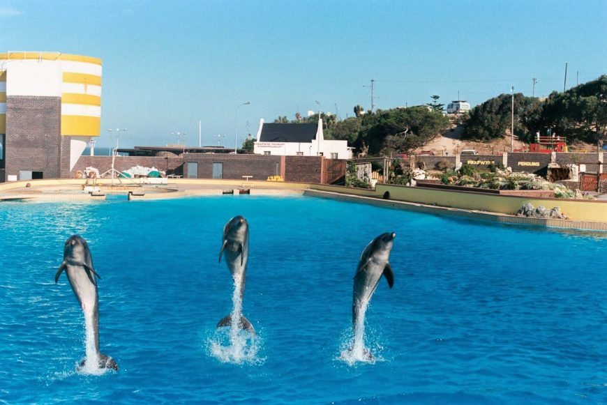 547e6d530df1c Bayworld Plans to Revive Dolphin Exhibit for a Third Time