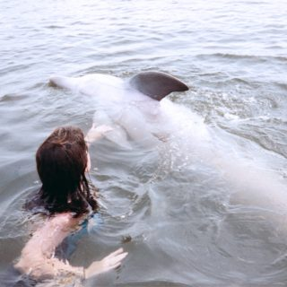 Captive dolphin encounter
