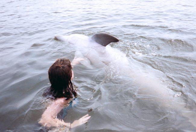 Captive dolphin encounter