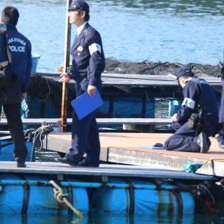 Taiji, Japan, Dolphin Base, The Cove, Dolphin Project Cove Monitors, Dolphin Hunting, Dolphin Slaughter, Captivity