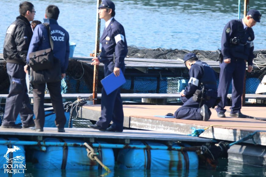 Taiji, Japan, Dolphin Base, The Cove, Dolphin Project Cove Monitors, Dolphin Hunting, Dolphin Slaughter, Captivity