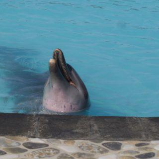Wake Bali Dolphins