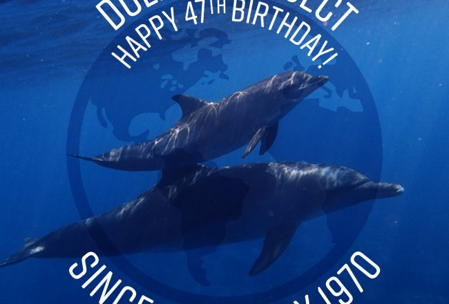 Happy 47th Birthday Dolphin Project!