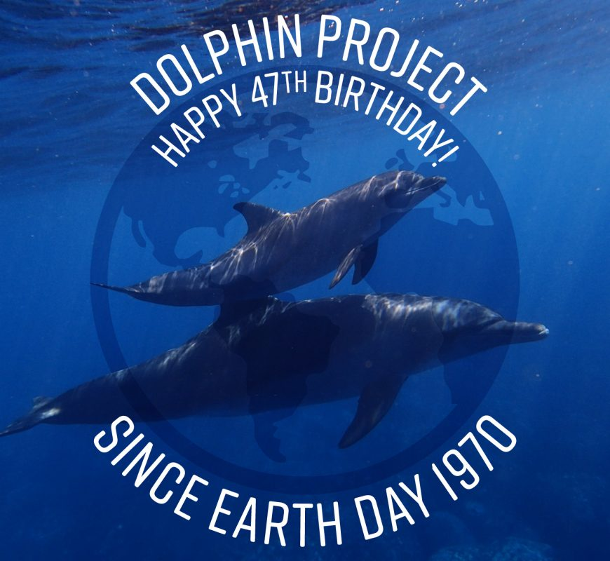 Happy 47th Birthday Dolphin Project!