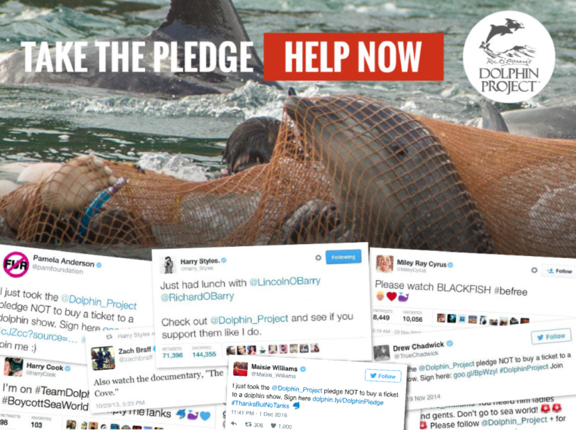 Take the Pledge No Dolphin Captivity