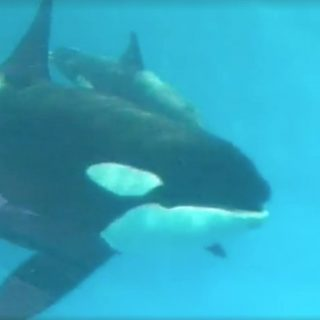 Baby Kyara dies at SeaWorld San Antonio, Texas