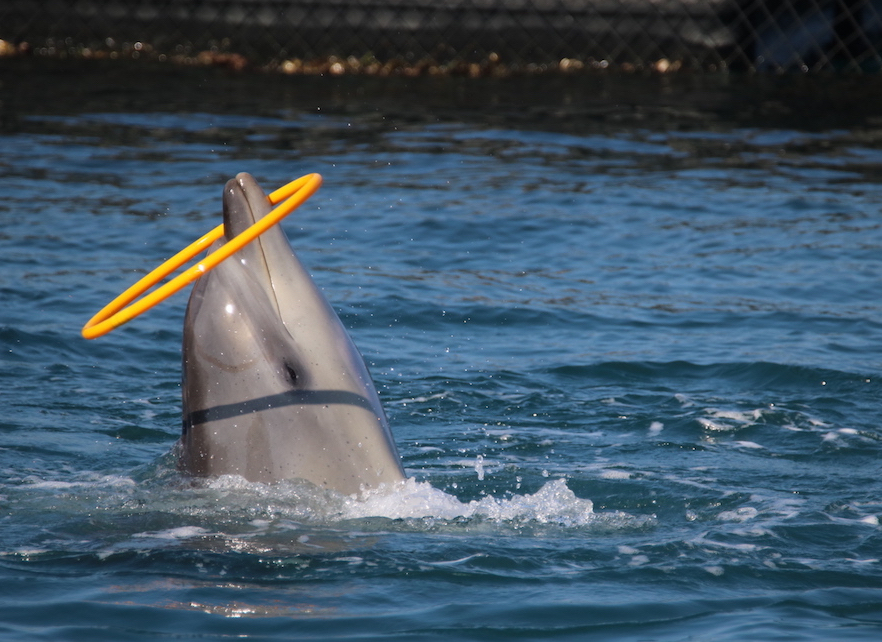 Millions of years of evolution to perform tricks for food. Captivity is no place for dolphins!