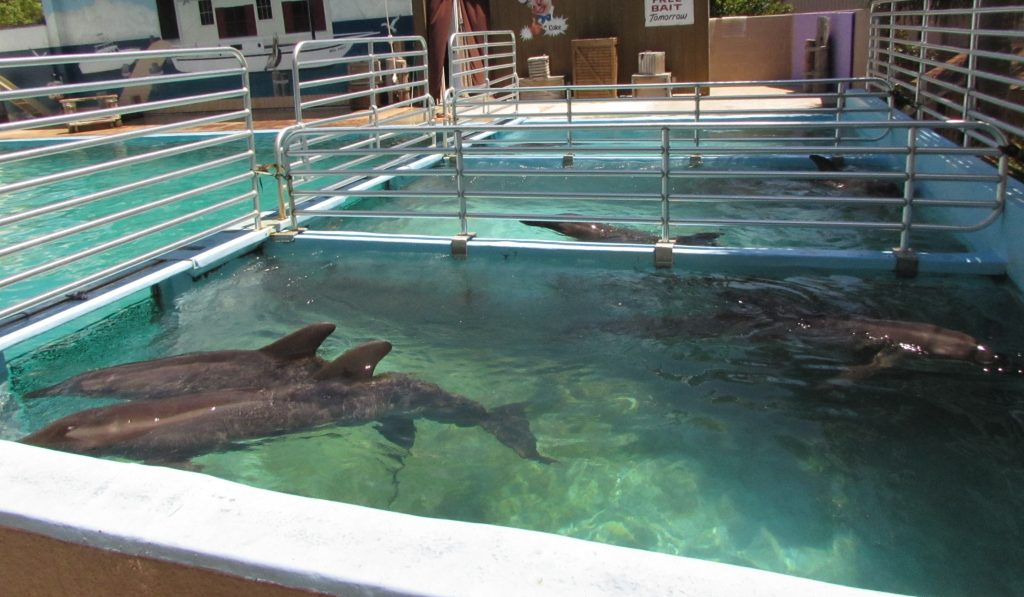 captive dolphins tank crowded dirty Dolphin Project