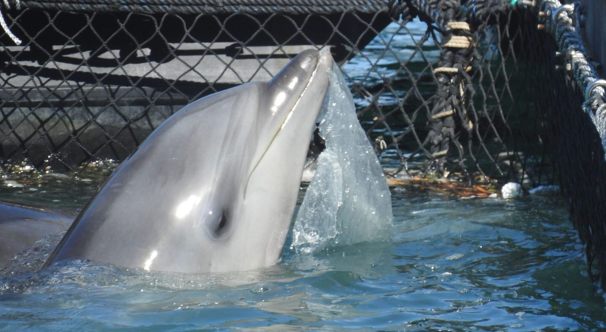 Plastic Garbage in Sea Pen Taiji Dolphin Project Captive Dolphin
