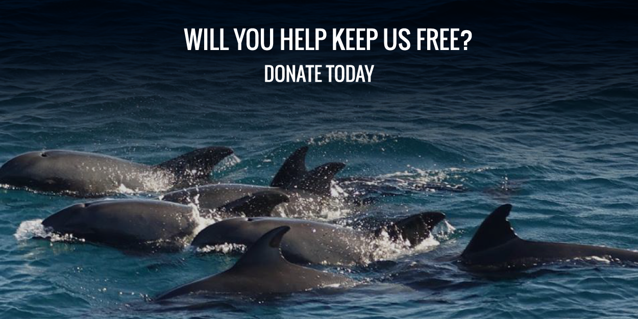 Donate to Ric O'Barry's Dolphin Project