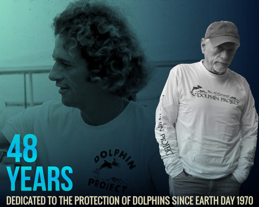 Happy 48th Birthday Dolphin Project