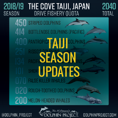taiji season updates