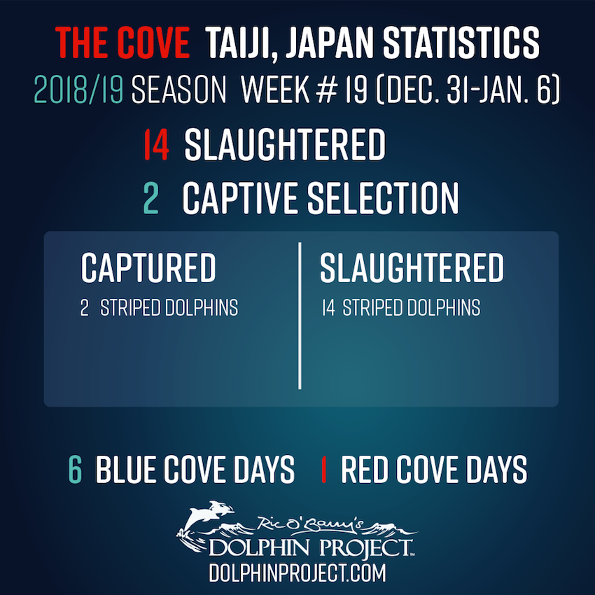 2018-19 Taiji Weekly Updates - Week #19