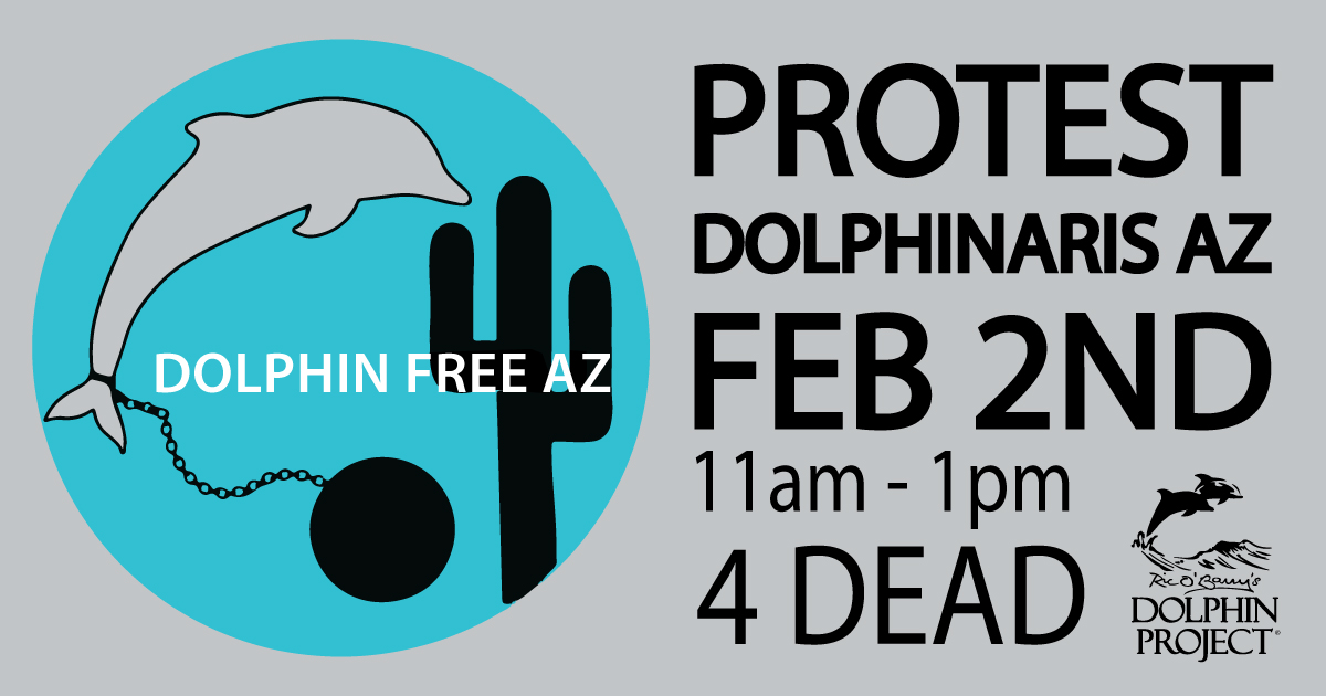 Protest Dolphinaris Arizona!