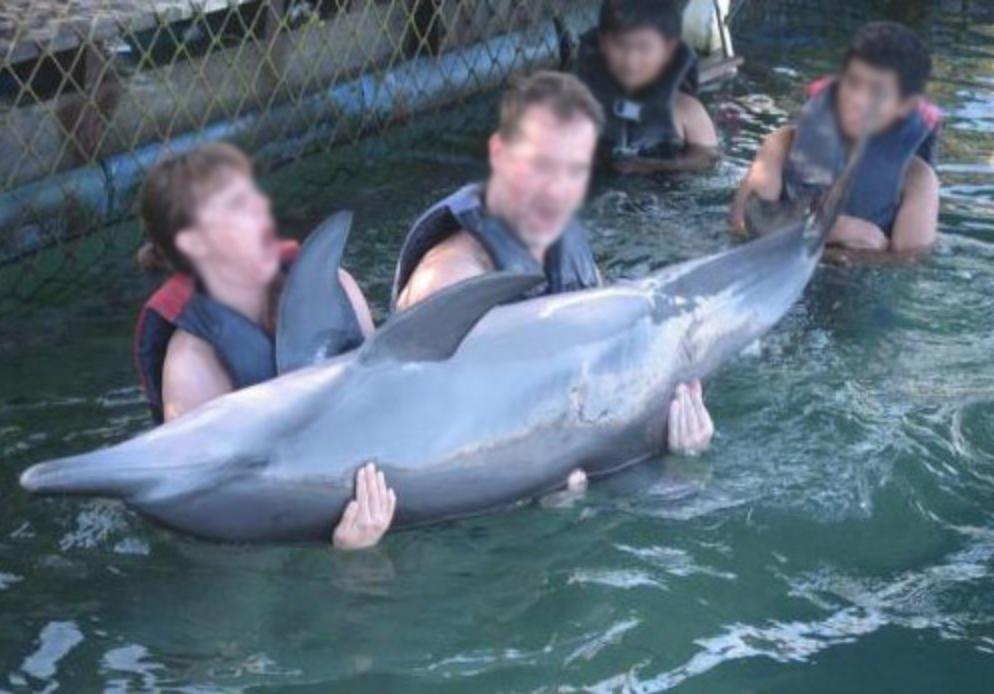 Dolphin Lodge Bali swim-with program
