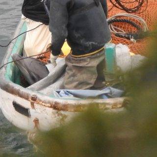 Young female calf dies in The Cove, Taiji, Japan