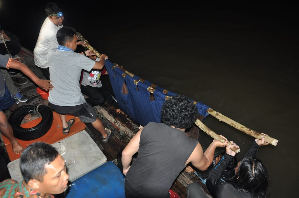 Indonesia dolphin rescue team prepares dolphin for release into open water. Credit: DolphinProject.com