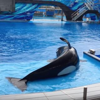 Kayla on slide-out, SeaWorld Orlando.