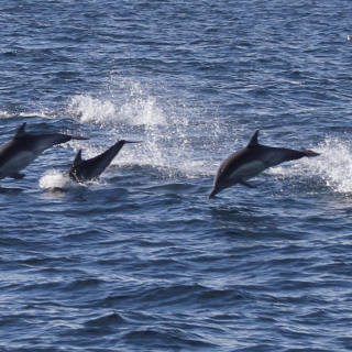 Season Ends for Taiji's Dolphin Hunts