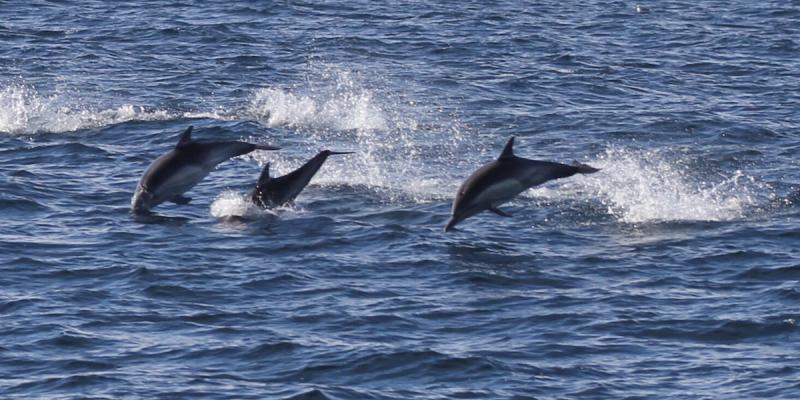 Season Ends for Taiji's Dolphin Hunts