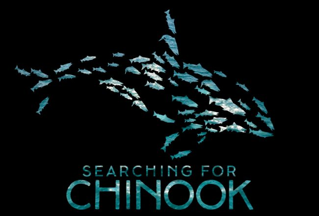searching for chinook