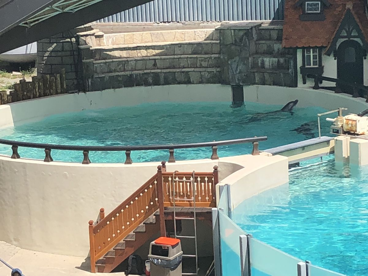 Bottlenose dolphins before performance, Marineland, Niagara Falls