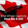 Help Canada End Whale Captivity!