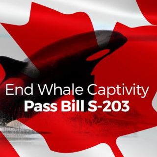 Help Canada End Whale Captivity!