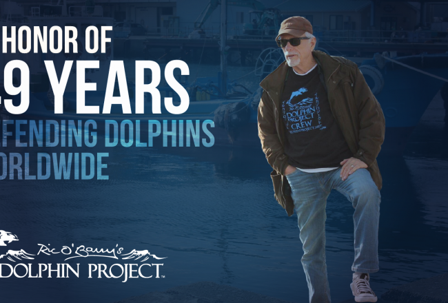 Happy 49th Birthday Dolphin Project!