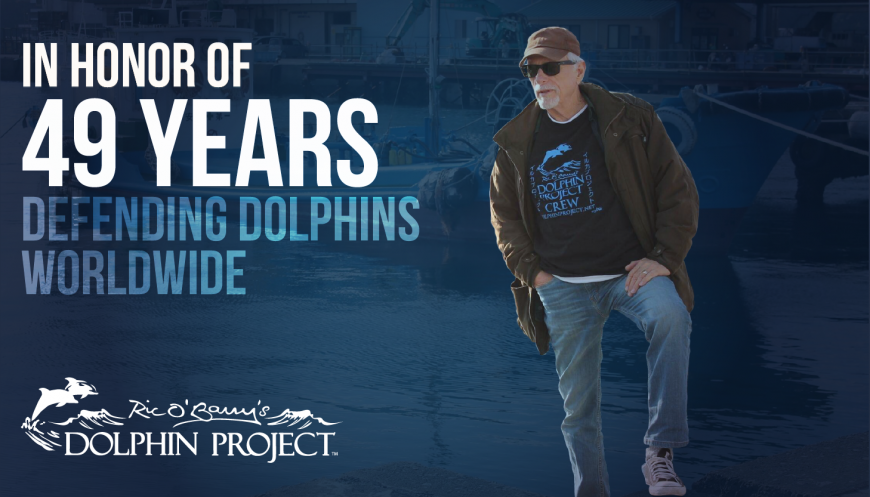 Happy 49th Birthday Dolphin Project!