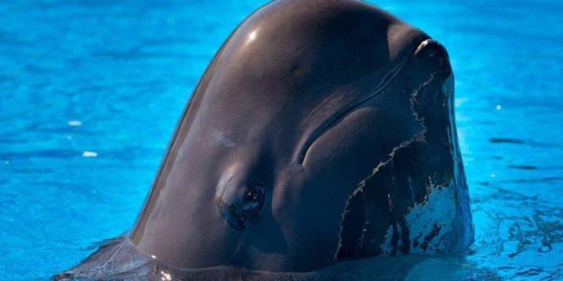Fredi, SeaWorld Orlando