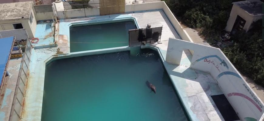 Honey the bottlenose dolphin languishes in her tank at the Inubosaki Marine Park Aquarium in Japan