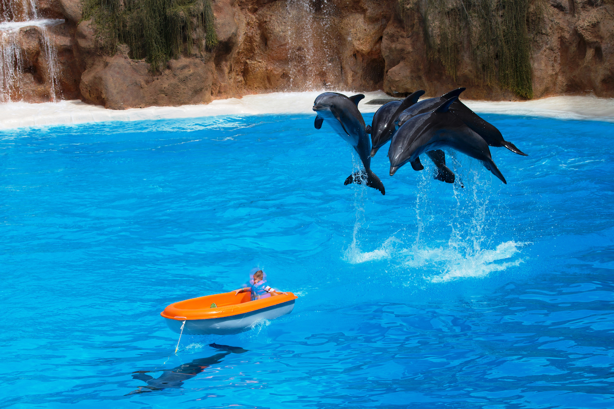 Loro Parque's dolphin show. Credit: Helene O'Barry
