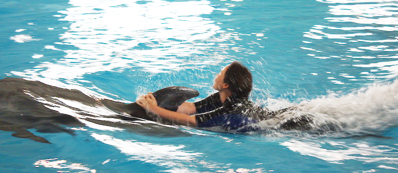Swim-with-dolphins programs