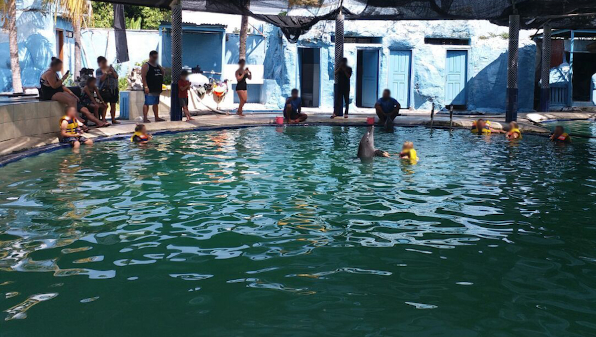 Dolphins are routinely exploited at the Melka Excelsior Hotel, Indonesia. Credit: DolphinProject.com