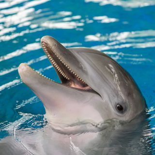 Bottlenose dolphin Maya. Credit: National Aquarium
