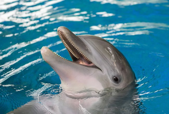 Bottlenose dolphin Maya. Credit: National Aquarium
