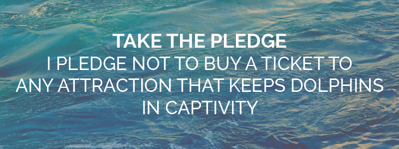 Take the pledge Dolphin Project